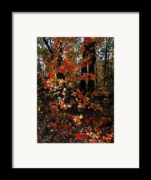 Autumn Scenes Framed Print featuring the photograph A Slash Of Sunlight by Julie Dant
