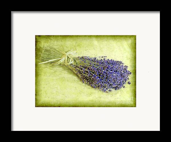 Lavender Framed Print featuring the photograph A Spray Of Lavender by Judi Bagwell