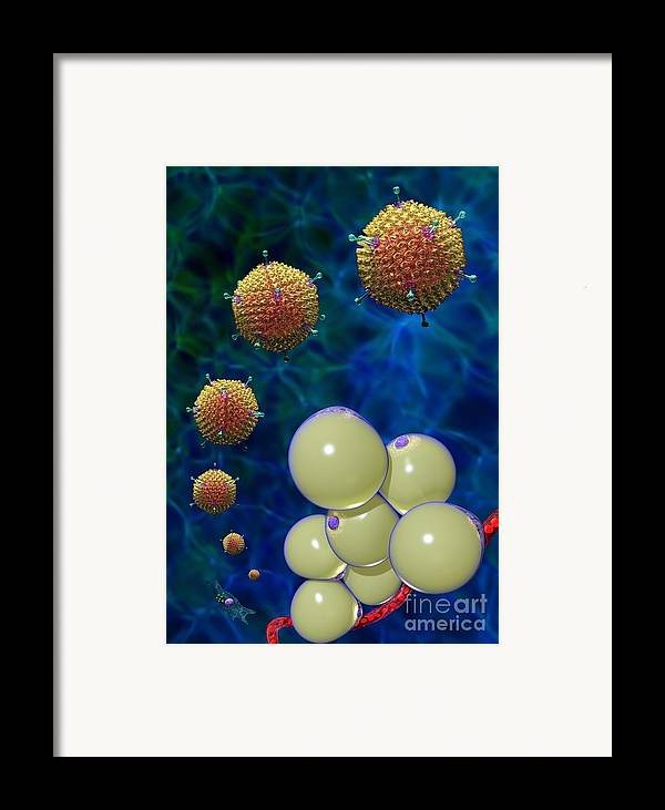 36 Framed Print featuring the digital art Adenovirus 36 And Fat Cells by Russell Kightley