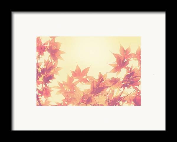 Autumn Framed Print featuring the photograph Autumn Sky by Amy Tyler