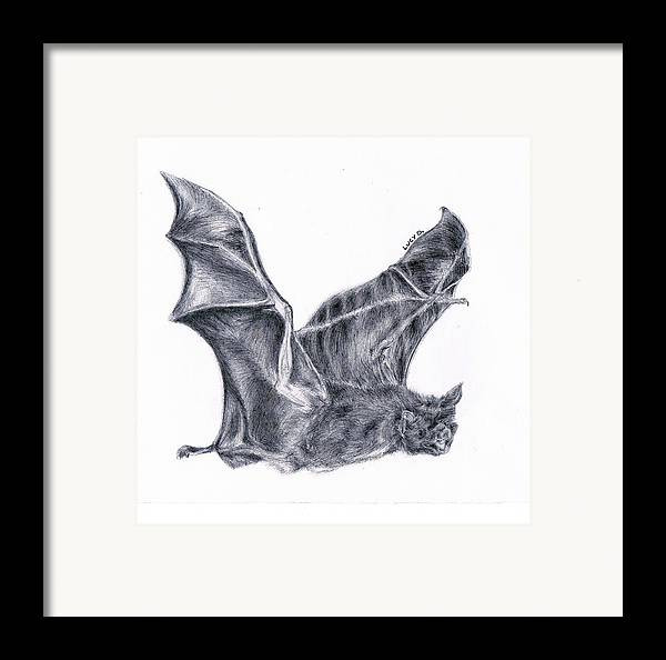 Bat Framed Print featuring the drawing Bat by Lucy D