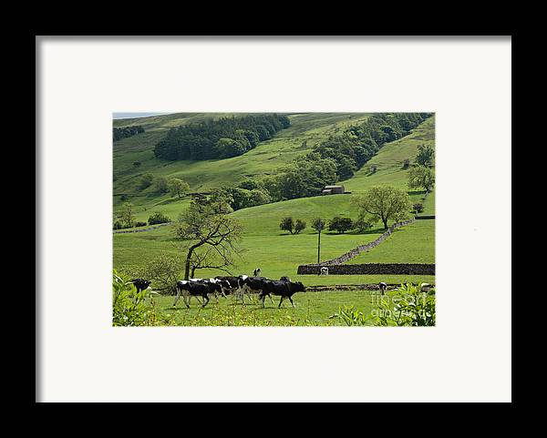 Bishopdale Framed Print featuring the photograph Bishopdale In The Yorkshire Dales National Park by Louise Heusinkveld