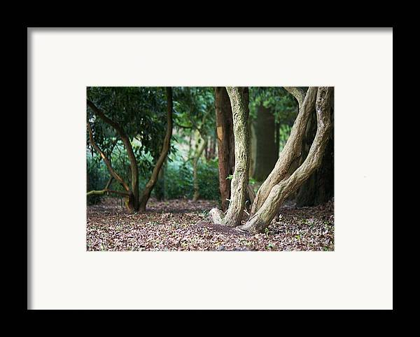Forest Framed Print featuring the photograph Bizarre Trees by Angela Doelling AD DESIGN Photo and PhotoArt