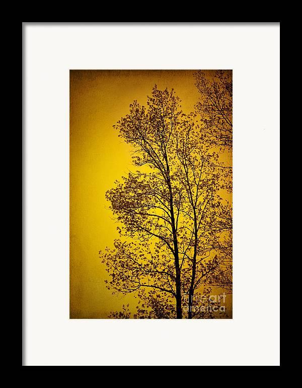 Sunset Framed Print featuring the photograph Blazing Sunset by Cheryl Davis