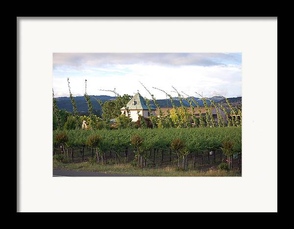 Blowing Grape Vines Vineyards Rustic House Winery Napa California Ca Wine Framed Print featuring the photograph Blowing Grape Vines by Holly Blunkall
