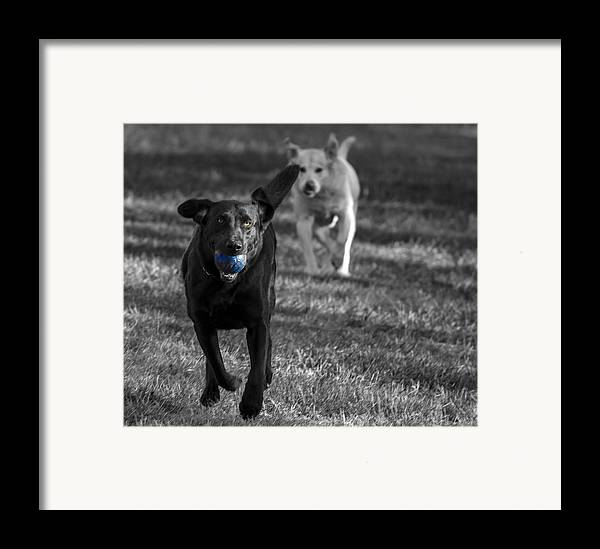 Dog Framed Print featuring the photograph Blue Ball by Jean Noren
