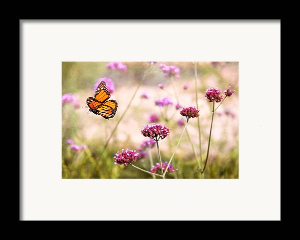 Monarch Framed Print featuring the photograph Butterfly - Monarach - The Sweet Life by Mike Savad