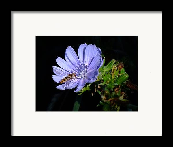 Bee Framed Print featuring the photograph Buzzy In Blue by Alison Richardson-Douglas
