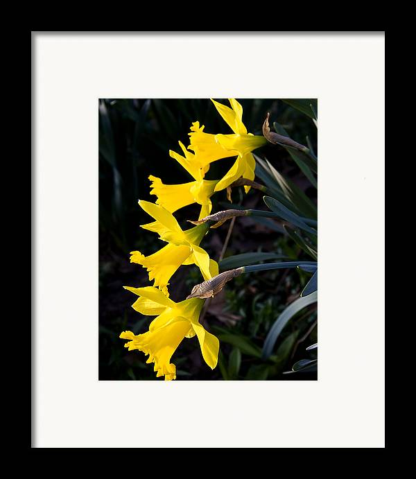 Nature Framed Print featuring the photograph Chorus Line by Michael Friedman