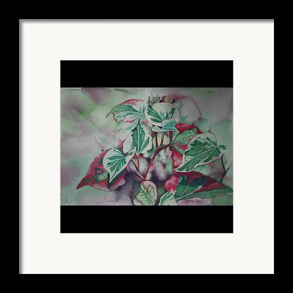 Close Focus Nature Scene Framed Print featuring the drawing Christmas In July by Patsy Sharpe