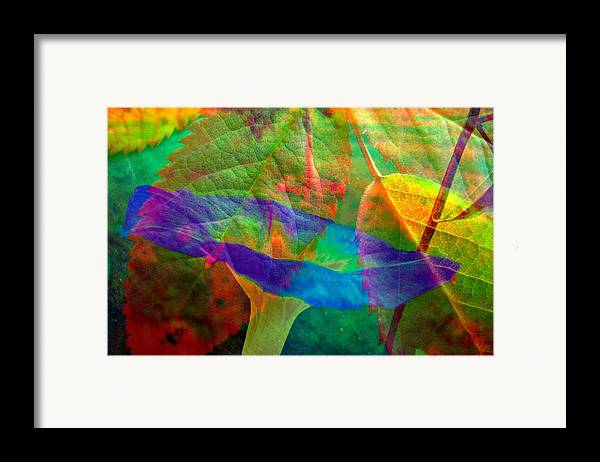 Abstract Framed Print featuring the photograph Colors Of Autumn by Shirley Sirois