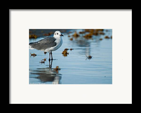 Seagull Framed Print featuring the photograph Contemplative by Barbara Shallue