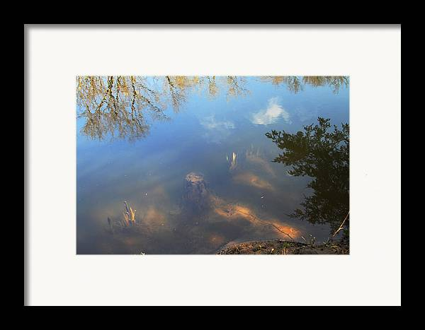 Nature Framed Print featuring the photograph Different Worlds by Karol Livote