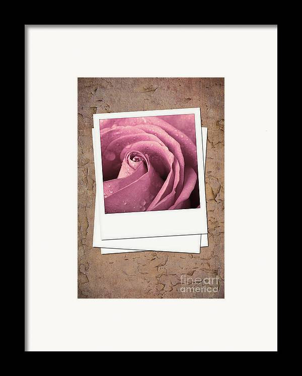 Aged Framed Print featuring the photograph Faded Rose Photo by Jane Rix
