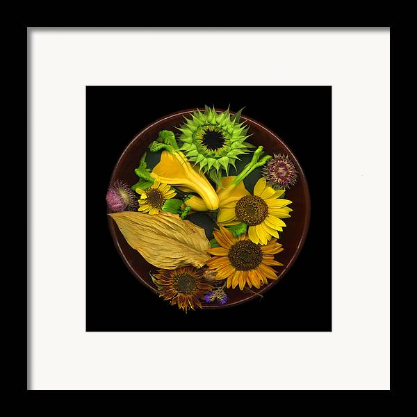 Sunflower Framed Print featuring the photograph Fall Colors by J Arthur Davis