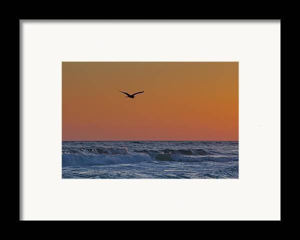 Beach Framed Print featuring the photograph Fly By by Charles Warren