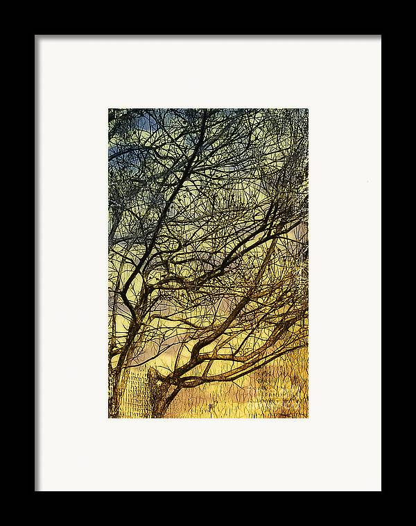Gothic Framed Print featuring the photograph Ghosts Of Crape Myrtles by Judi Bagwell