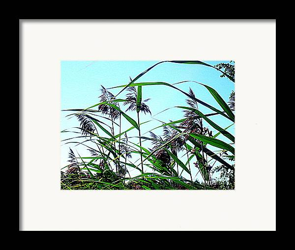 Blue Canvas Prints Framed Print featuring the photograph Hay In The Summer by Pauli Hyvonen