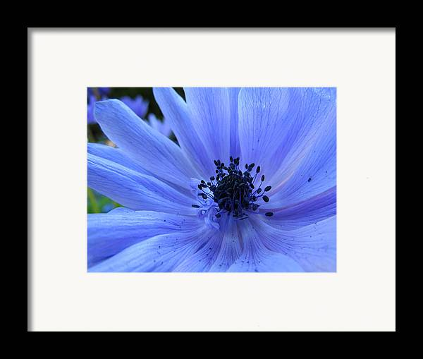 Blue Framed Print featuring the photograph Here I Am by Eva Kondzialkiewicz
