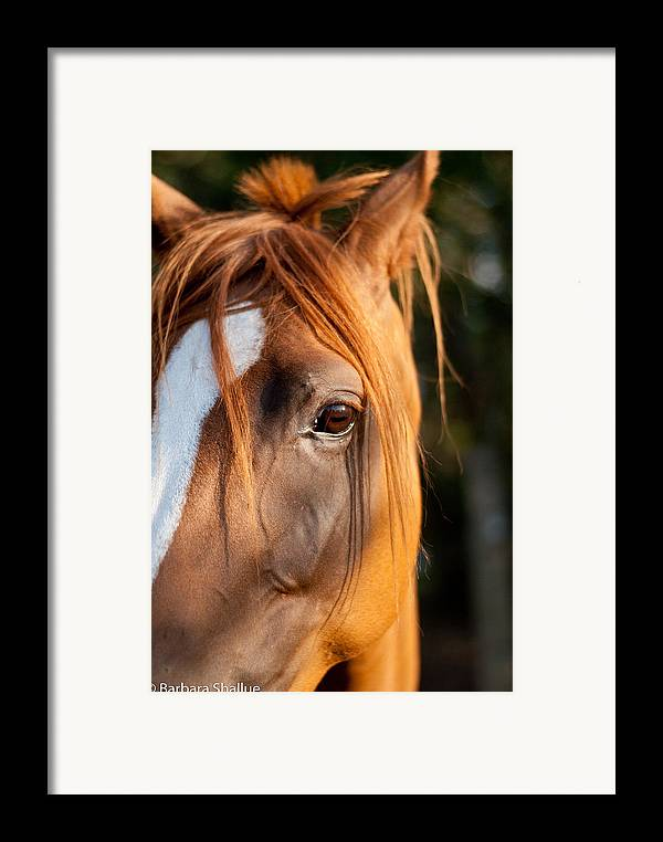 Horse Framed Print featuring the photograph I See You by Barbara Shallue