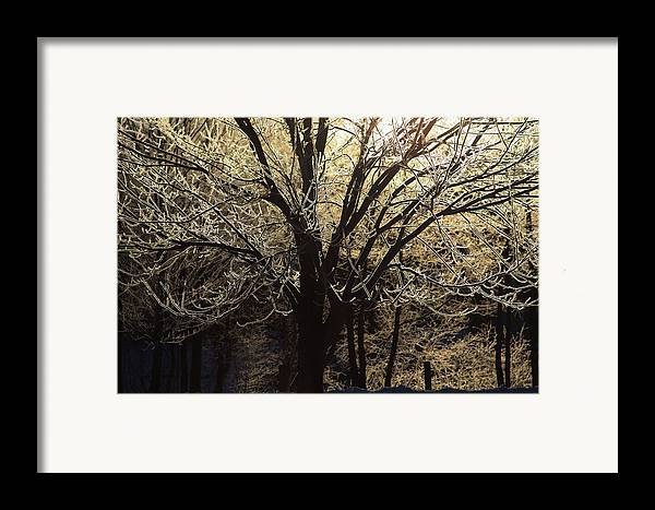 Frozen Framed Print featuring the photograph Iced by Karol Livote