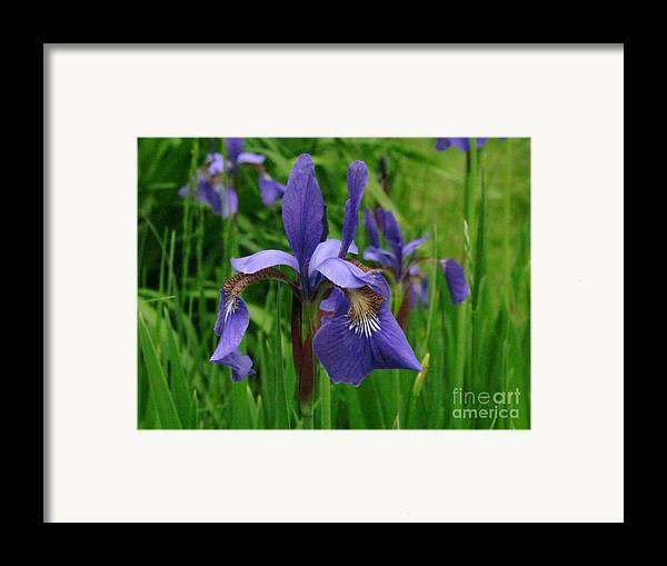 Iris Framed Print featuring the photograph Irises by Randi Shenkman