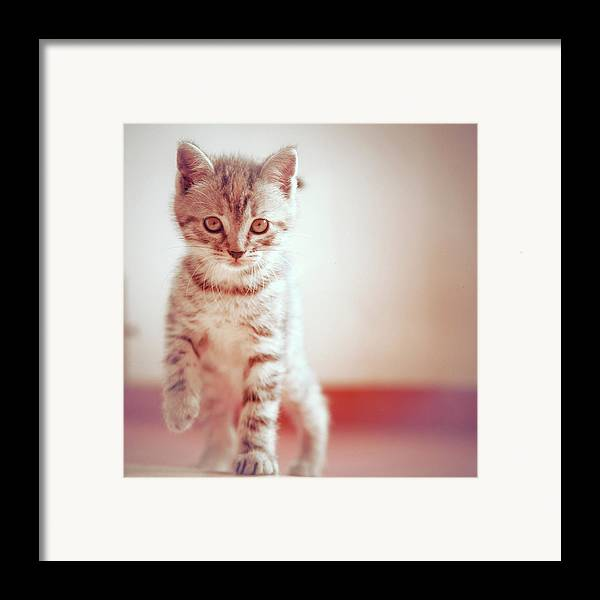 Square Framed Print featuring the photograph Kitten Walking On Floor by Alberto Cassani