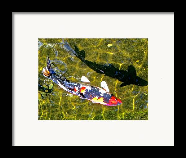 Fish Framed Print featuring the photograph Koi With Shadow by Brian D Meredith