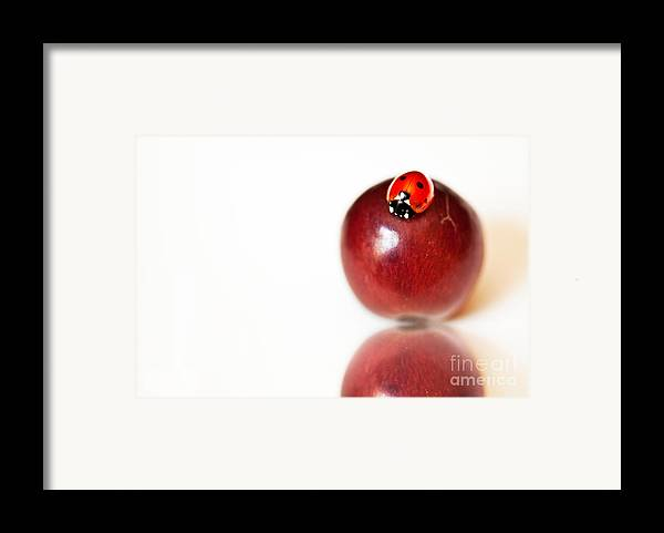 Ladybug Framed Print featuring the photograph Ladybug On Grape by Artist and Photographer Laura Wrede