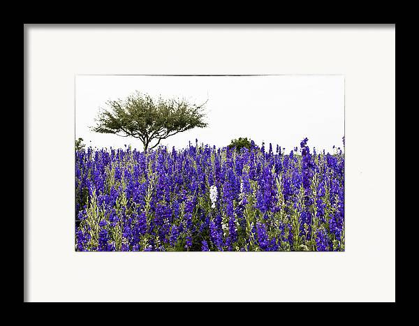 Lavender Framed Print featuring the photograph Lavender Field by Lisa Spencer