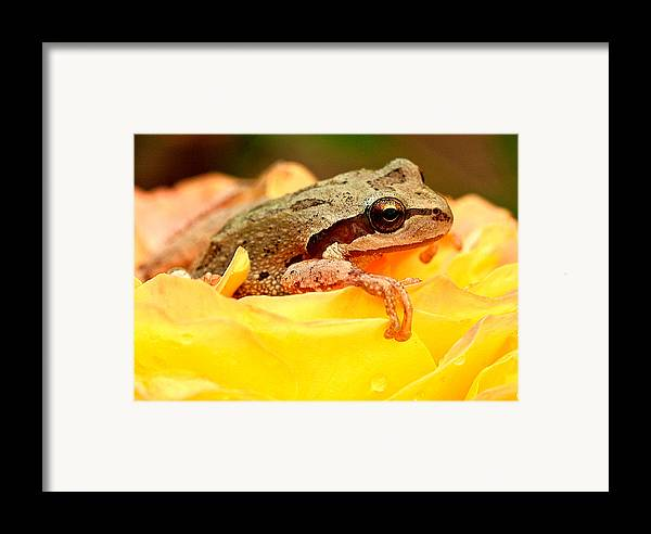 Amphibians Framed Print featuring the photograph Life In The Rose by Jean Noren