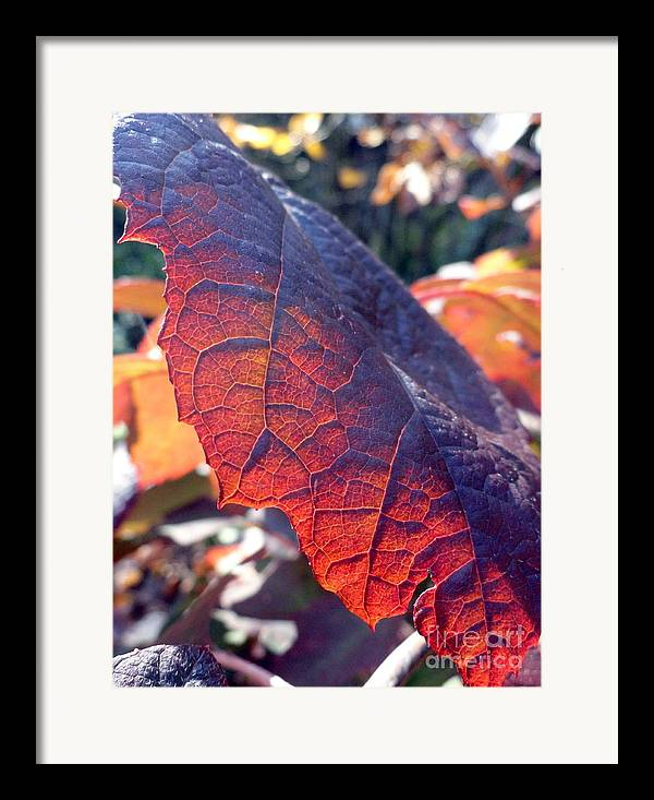 Leaves Framed Print featuring the photograph Light Of The Lifeblood by Trish Hale