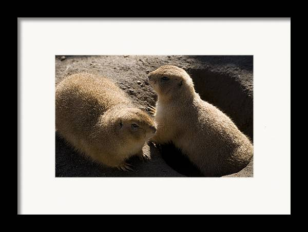 Prairie Dog Framed Print featuring the photograph Little Dogs On The Prairie by Trish Tritz