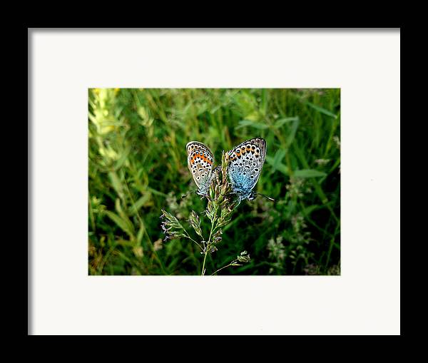Butterfly Framed Print featuring the photograph Loving by Lucy D