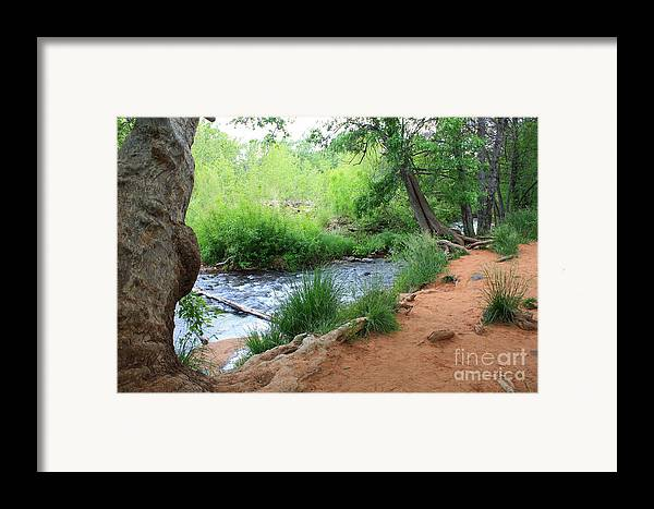 Arizona Landscape Framed Print featuring the photograph Magical Trees At Red Rock Crossing by Carol Groenen