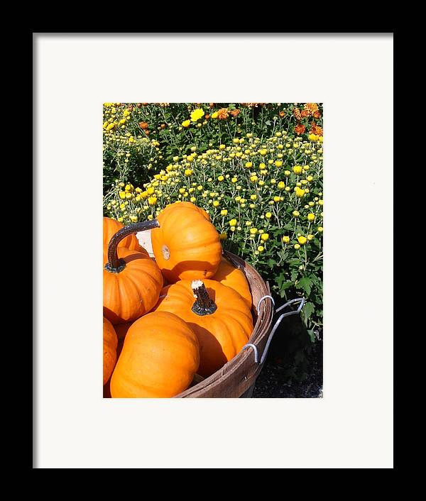 Pumpkins Framed Print featuring the photograph Mini Pumpkins by Kimberly Perry