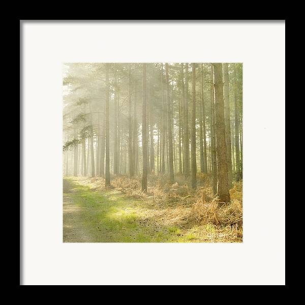 Misty Framed Print featuring the photograph Misty Sunrise by Paul Grand
