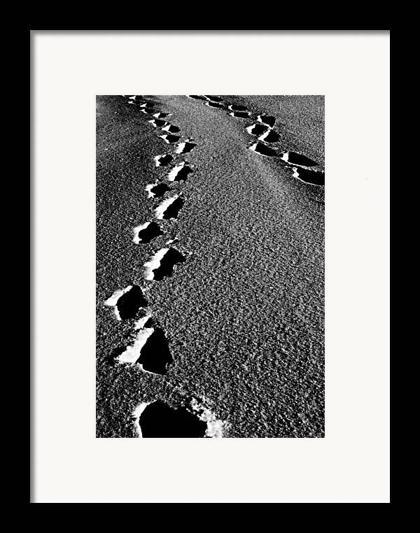 Elm Framed Print featuring the photograph Moon Walk by JC Photography and Art