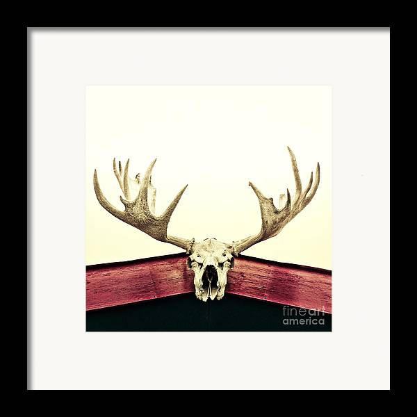 Moose Framed Print featuring the photograph Moose Trophy by Priska Wettstein