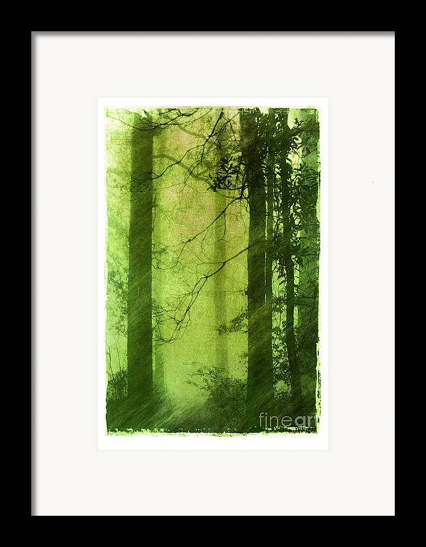 Green Framed Print featuring the photograph Mystical Glade by Judi Bagwell