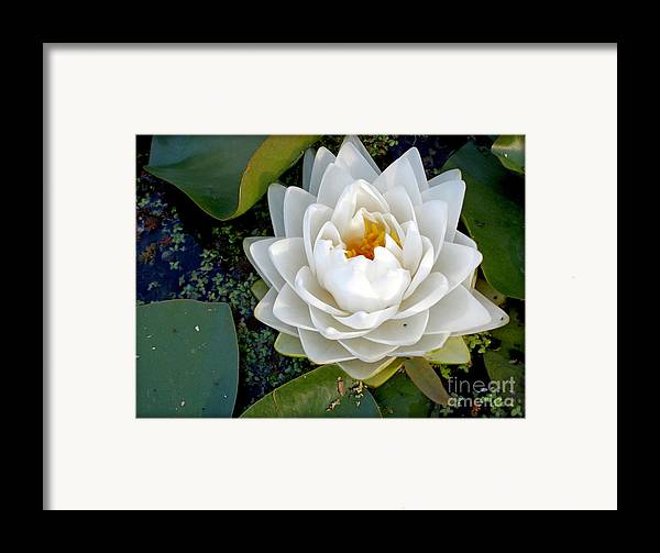 Photography Framed Print featuring the photograph Optical Illusion In A Waterlily by Kaye Menner