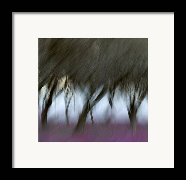 Orchard Framed Print featuring the photograph Orchard In Springtime by Carol Leigh