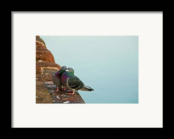 Horizontal Framed Print featuring the photograph Pigeons In Love by Image by J. Parsons