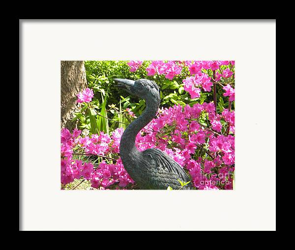Swan Framed Print featuring the painting Pinkness Of A Bird by Kimberlee Weisker