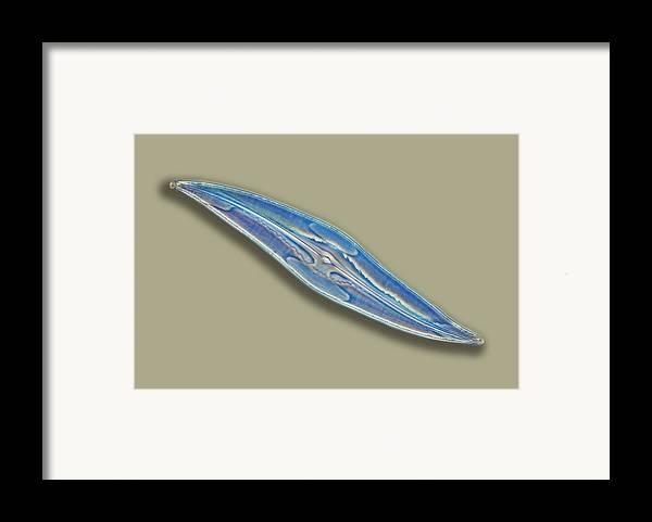 Pleurosigma Angulatum Framed Print featuring the photograph Pleurosigma Sp Diatom, Light Micrograph by Frank Fox