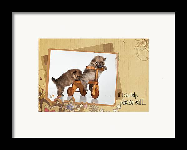 Puppies Framed Print featuring the photograph Pomeranian 1 by Everet Regal