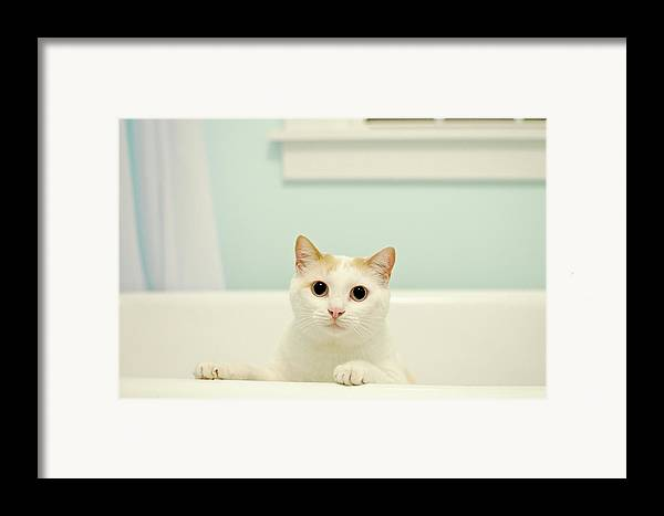 Horizontal Framed Print featuring the photograph Portrait Of White Cat by Melissa Ross