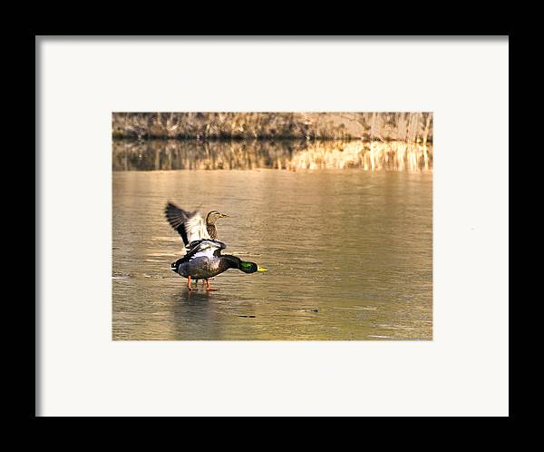Usa Framed Print featuring the photograph Preflight Check by LeeAnn McLaneGoetz McLaneGoetzStudioLLCcom