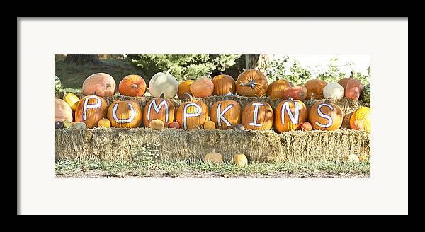 Pumpkins Framed Print featuring the photograph Pumpkins P U M P K I N S by James BO Insogna