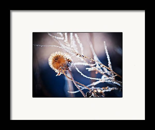 Nature Framed Print featuring the photograph Road Side Plant by Lisa Spencer